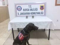 Bursa'da 60 Bin Liralık 'Varis' Operasyonu