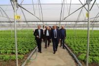 Erzincan Milletvekili Karaman Sera İşletmesini Ziyaret Etti