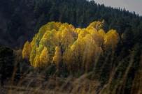 SıRADıŞı - Gümüşhane'de Sonbahar Güzelliği