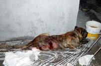Kadını Ve Köpeğini Kurtarmak İsteyen Mahalleli Saldırgan Köpeği Bıçakladı
