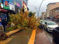Muş'ta Şiddetli Rüzgar Ağacı Devirdi