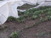DOLU YAĞIŞI - Tarsus'ta Dolu Ekili Tarlalara Büyük Zarar Verdi