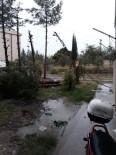 ELEKTRİK DİREĞİ - Üzerine Yıldırım Düşen Ağaç Parçalandı