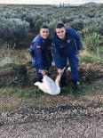 Jandarma Bu Kez Pelikan Yakaladı