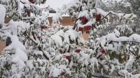Kahramanmaraş'ta Kar Elma Üreticisini Hazırlıksız Yakaladı