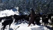 RAMAZAN YıLDıRıM - Kar Yağışı Hayvanlarını Otlatan Çifti Hazırlıksız Yakaladı
