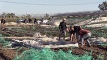 DOLU YAĞIŞI - Mersin'de Dolunun Zarar Verdiği Seralarda İnceleme