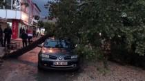 NEVZAT DEMİR - Rüzgarın Devirdiği Ağaç Otomobilin Üzerine Düştü