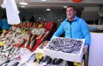 BALIK FİYATLARI - Balıkçıların Gözü Palamuttan Sonra Hamside