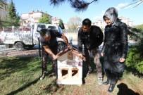 Safranbolu'da Kedi Evlerinin Sayısı Artıyor