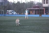 SOKAK KÖPEĞİ - Fanatik köpek maçı durdurdu