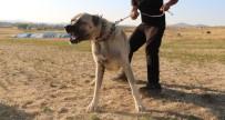 INSTAGRAM - Köpek Saldırısına Karşı Ne Yapmalı ?