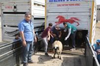 39 Genç Çiftçiye Bin 404 Küçükbaş Hayvan Dağıtıldı