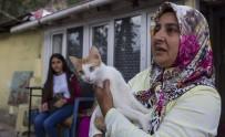 KEMERBURGAZ - Eyüpsultan'da Sokak Hayvanları Sahiplendiriliyor