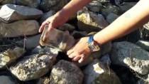 YAVRU KÖPEK - Plastik Kapta Başı Sıkışan Köpeği Vatandaşlar Kurtardı