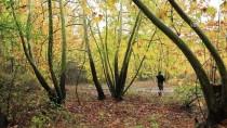 Sonbaharda Doğa Tutkunlarının Uğrak Mekanı Açıklaması Arapgir