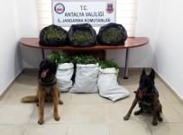 KOKAIN - Antalya'da Uyuşturucu Operasyonlarına 15 Tutuklama