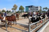 ÇANAKKALE ONSEKIZ MART ÜNIVERSITESI - Biga 5. Sığır Güzellik Yarışması Yapıldı
