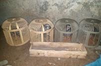 KıNALı - Kınalı Keklikler Kaçak Avcılardan Elinden Kurtarıldı
