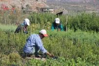HASAN ARSLAN - Kursiyerler İlçenin Peyzaj İhtiyacını Karşılıyor
