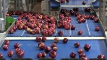 YUSUF ARSLAN - Organik Mumlanan Elmalar Uzak Doğu Kapılarını Açtı