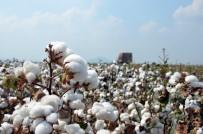FAİZSİZ KREDİ - Adana'da 12 Bin Ton 'İyi Pamuk' Üretildi