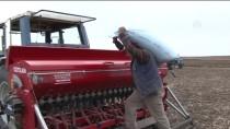 Buğday Tohumları Toprakla Buluşmaya Başladı