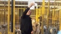 HALUK LEVENT - Haluk Levent, Nilüfer'deki Hayvan Bakım Merkezi'ne Hayran Kaldı