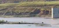 SAĞANAK YAĞIŞ - Nehirde Mahsur Kalan Eşek Kurtarılmayı Bekliyor
