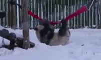 PANDA - Pandalardan Kar Keyfi