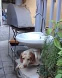 SOKAK KÖPEĞİ - Parmaklıklara Sıkışan Köpek Kurtarılmayı Bekledi