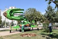 ŞELALE - Şahinbey'de Ağaçlar Kesilmeden Taşınıyor