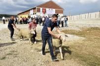 AVRUPA ÜLKELERİ - TİKA'dan Kosovalı Çiftçilere Destek