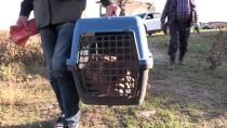 Adana'da Yaralı Balık Baykuşu Bulundu