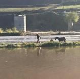 SAĞANAK YAĞIŞ - Dicle Nehrinde Mahsur Kalan Eşek İtfaiye Ekipleri Tarafından Kurtarıldı