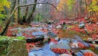 ENDEMIK - Kazdağları'nın Sonbahar Renkleri Büyülüyor