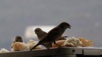 Klima Motorunda Isınan Serçeler, Ekmekle Besleniyor