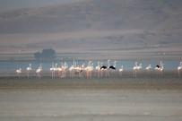 Yağışlarla Birlikte Kuşlar, Seyfe Gölüne Akın Ediyor