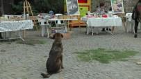 KERMES - Beykoz'da Hayvanlar İçin Kermes