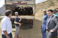 YENI DÜNYA - Beytüşşebap'ta Genç Çiftçilere Büyükbaş Hayvan Dağıtıldı