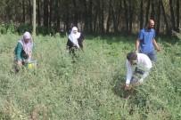 YEŞILYAYLA - Çiftçiler Yılın Son Hasadını Topluyor