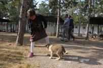 HAYVAN BARINAĞI - Çorum'da Dünya Hayvanları Koruma Günü Etkinlikleri