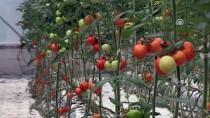 TONAJ - 'Dijital Tarım' İle Hasadı Öne Çekti