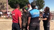 TOPLUM DESTEKLI POLISLIK - Engelleri Polis Atlarıyla Aşıyorlar