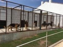 KÖPEK ÇİFTLİĞİ - Eskişehir'de Köpek Oteli Ve Çiftliği