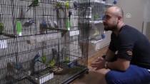 MUHABBET KUŞU - Evinin Salonunda 60 Muhabbet Kuşu Besliyor