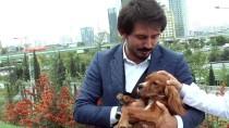 TÜRK CEZA KANUNU - Genç Ensar'dan 'Hayvanları Koruma Günü' Mesajı