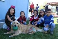 HAYVAN BARINAĞI - Hayvan Haklarını Koruma Gününde Barınak Ziyaretçi Akınına Uğradı