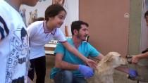 KÖPEK YAVRUSU - Köpek Yavrusunun 'Kalp Atışlarını' Dinlediler