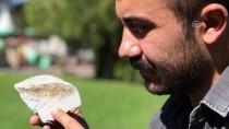 JEOLOJI - Muğla'da 15,9-11,6 Milyon Yıllık Balık Fosili Bulundu